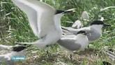 Vogelparadijs in Waddenzee gered