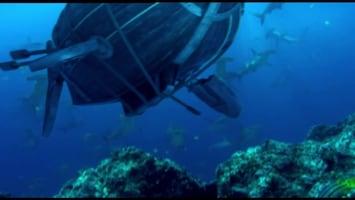 Piet Piraat Wonderwaterwereld IJsbeer