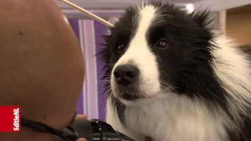 Hondenverkiezing slaat aan