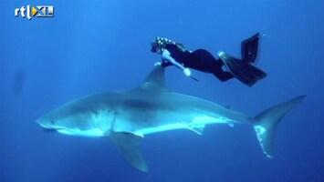 Editie Nl - Vrouw Zwemt Met Haaien
