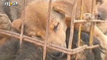 RTL Nieuws 750 honden van de slacht gered