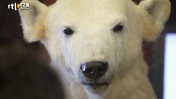 RTL Nieuws Populaire ijsbeer Knut opgezet in museum
