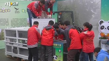 RTL Nieuws Chinese panda's maken reis van 8000 km