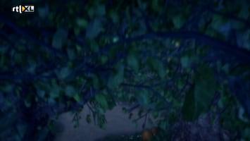 Sprookjesboom - De Heks En De Ezel