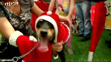 RTL Nieuws Kerstkolder in Peru: pimp je hond op
