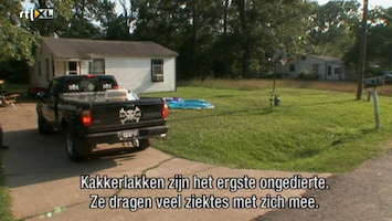 Helden Van 7: Billy The Exterminator - Helden Van 7: Billy The Exterminator /7