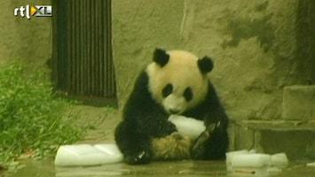 RTL Nieuws IJsje voor panda's