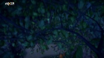 Sprookjesboom - De Klein Is Fijn Club