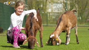 RTL Nieuws Kijkje op de kinderboerderij
