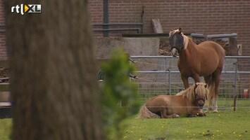 RTL Nieuws Seks met dieren wordt nauwelijks veroordeeld
