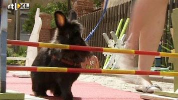 RTL Nieuws Wedstrijd voor atletische konijnen