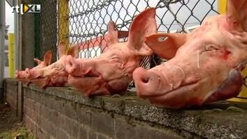 RTL Nieuws Vracht varkenskoppen op de stoep