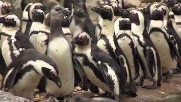 Uitgelicht - Afl. 13: Burgersâ' Zoo