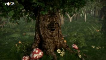 Sprookjesboom Grote opruimdag