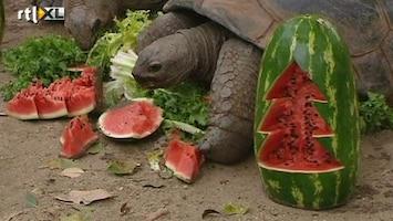 RTL Nieuws Een vrolijke kerst in de dierentuin