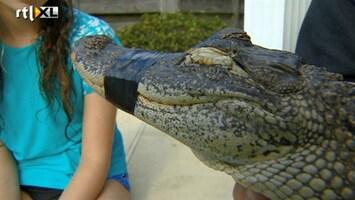 RTL Nieuws Zwemmen met alligators op kinderfeestje Florida