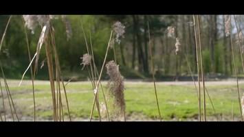 Burgers' Zoo Natuurlijk Breedlipneushoorn