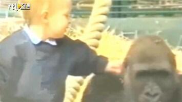 RTL Nieuws Peuter speelt ongedwongen met gorilla's
