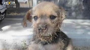 RTL Nieuws Puppy gered uit cactus