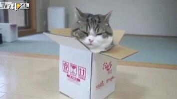 Editie NL Gekke kat Maru wil in doos