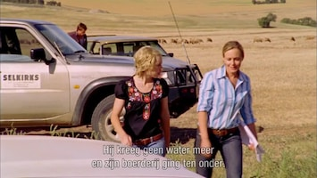 McLeod's Daughters Dammed