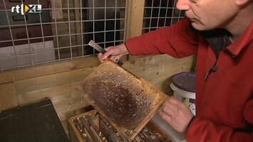 RTL Nieuws Onderzoek naar massale bijensterfte