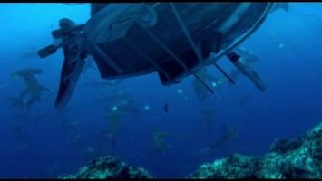 Piet Piraat Wonderwaterwereld Zeepaard/zeedraakje
