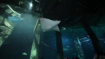 Uitgelicht - Afl. 18: Burgersâ' Zoo