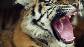 Uitgelicht - Afl. 28: Burgersâ' Zoo