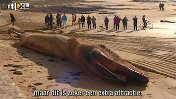 RTL Nieuws Walvis aangespoeld op Franse kust