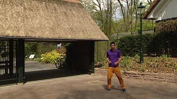Burgers' Zoo En Waarom - Timo En De Leeuwen