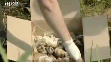RTL Nieuws Honderden embryo's in Rusland langs de weg gedumpt