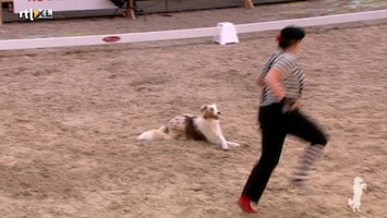 Royal Canin Dog Challenge - Afl. 2