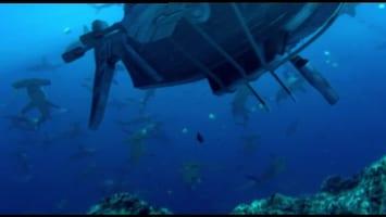Piet Piraat Wonderwaterwereld De murene/zeeslang