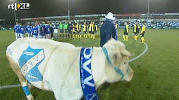 Voetbalfans Koe op het veld van AGOVV