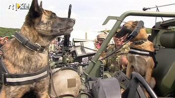 RTL Nieuws Honden trekken bekijks op veteranendag