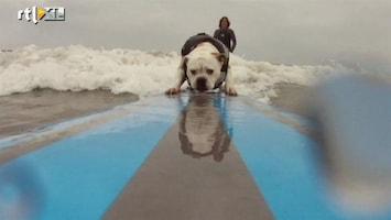 RTL Nieuws De leukste dierenvideo's van 2011