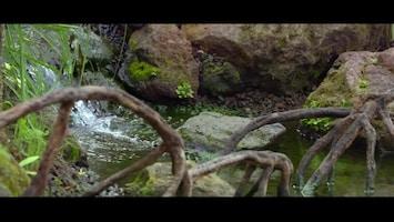 Burgers' Zoo Natuurlijk - Zeekoe