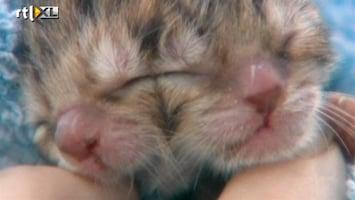 Editie NL Bizar: kitten met 2 koppen geboren