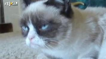 RTL Nieuws Grumpycat sluit miljoenendeal