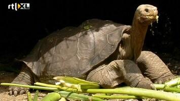 RTL Nieuws Reuzenschildpad Eenzame George overleden