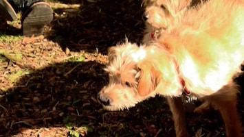 Honden Tv - Afl. 12