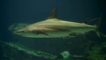 Burgers' Zoo Natuurlijk De haaien