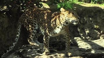 Uitgelicht - Afl. 1: Burgersâ' Zoo