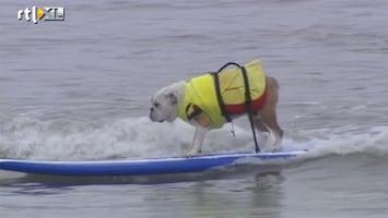 RTL Nieuws Surfwedstrijd voor honden