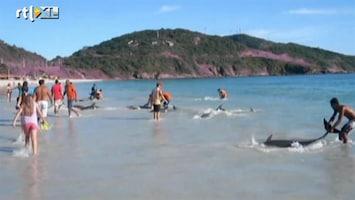 RTL Nieuws Omstanders redden aangespoelde dolfijnen
