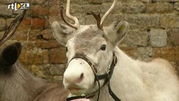 RTL Nieuws Huur een rendier tijdens kerst
