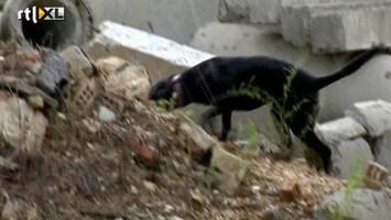 RTL Nieuws Na tien jaar erkenning voor 9/11-hond