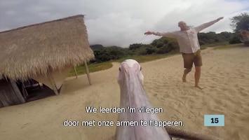 De Vijftien Vetste Video's Van Vandaag - Afl. 21