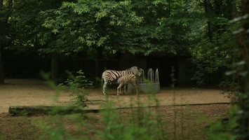 Jungle Club - Afl. 11
